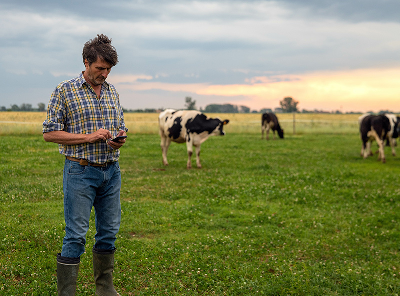 CHECS - Setting Cattle Health Certification Farmer on phone
