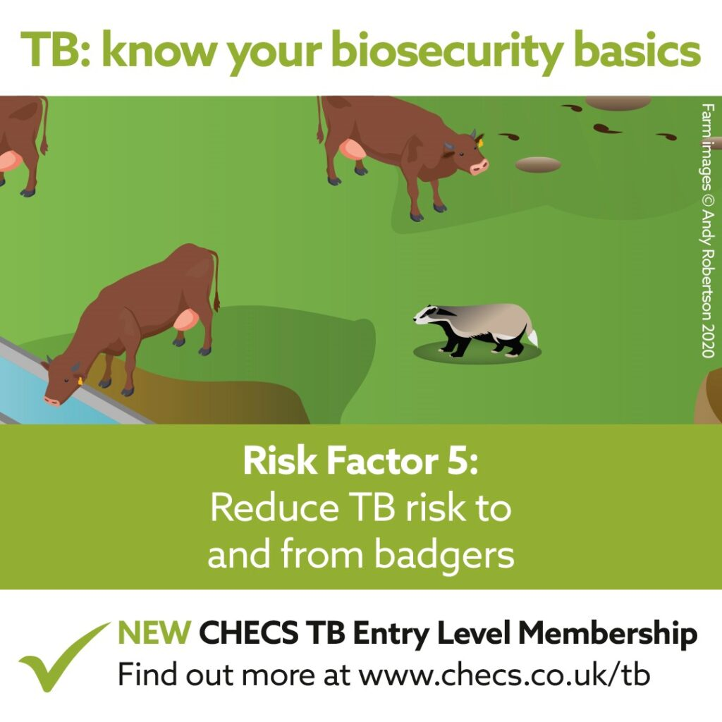 Reduce TB risk to and from badgers