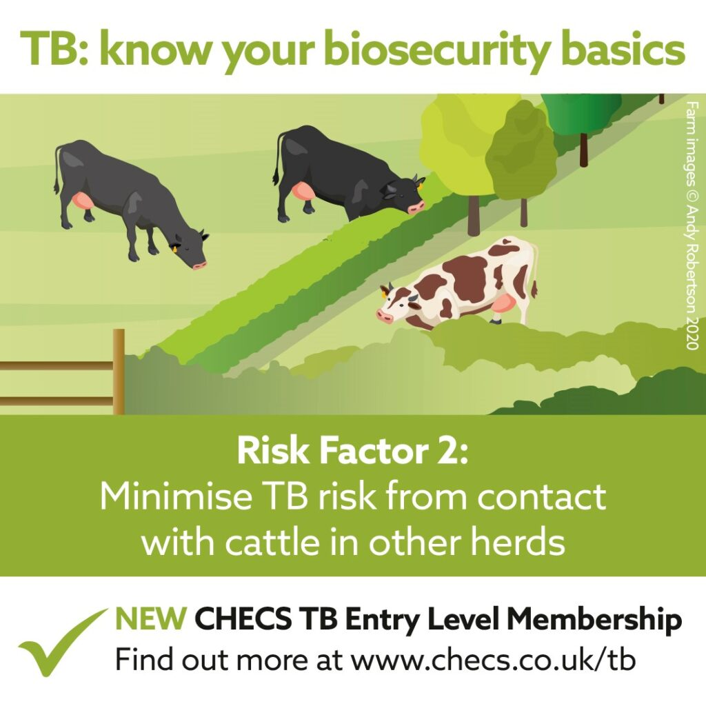 Minimise TB risk from contact with cattle in other herds