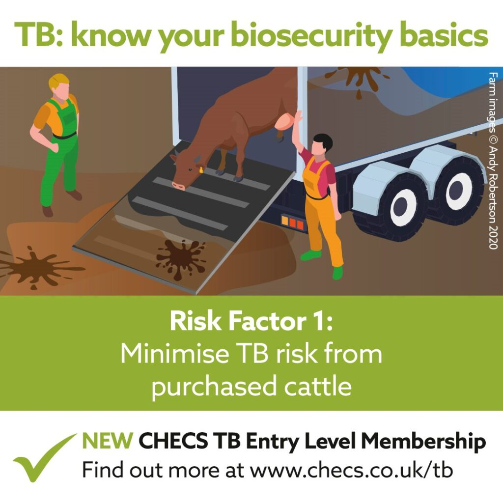 Minimise TB risk from purchased cattle